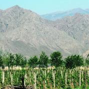 Face à l'Himalaya, un vin chinois vole