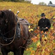 AOC Anjou : un vigneron bio condamné mais dispensé de peine