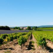 Dans l'Hérault, des vignobles en copropriété pour aider les jeunes à s'installer