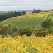 La météo a pénalisé la production viticole mondiale en 2016