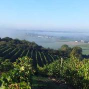 Les vignerons d'Anjou veulent rehausser leur image