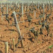 Les maladies menacent gravement le vignoble en France