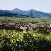 Coup d'envoi des vendanges en Alsace avec le Crémant