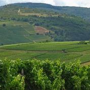 Viticulteurs du Beaujolais : entre crise et rénovation