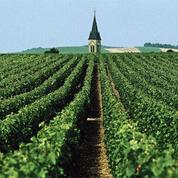Millésime 2015 : En Champagne, les voyants sont au vert