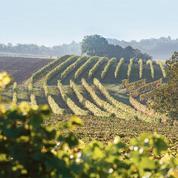 Millésime 2015 : La Bourgogne prometteuse