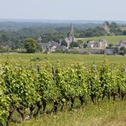 Les coopératives de Saumur et Bourgueil en passe de fusionner