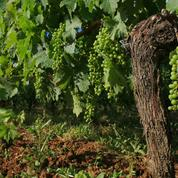 Vins de Bordeaux frelatés : Roger Geens relaxé au pénal, condamné au civil