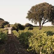 Premières vendanges dans la vallée du Rhône méridionale