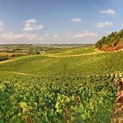 Pouilly-Fumé : un vigneron réputé conteste en justice la perte de son appellation
