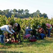 Bordeaux : Participez aux vendanges et devenez un expert des bulles