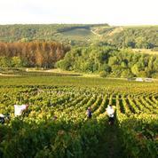 Vin de Bordeaux: la récolte a chuté de 40% en 2017