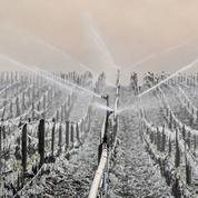 Le vignoble frappé par le gel