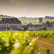 Expérience vendanges 2017 du château de Pommard