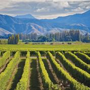 Quels vins à l'autre bout du monde ? Cap sur la Nouvelle-Zélande