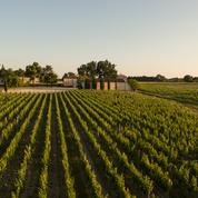 Les vignobles de Bordeaux et Cognac durement touchés par la grêle