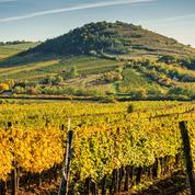 Italie: ventes de Prosecco en hausse de 6% en 2018, 460 millions de bouteilles