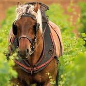 Bio : 5.000 euros d'amende avec sursis requis contre un vigneron qui a utilisé l'AOC Anjou