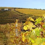 Le vin de Corrèze va bientôt obtenir une AOC