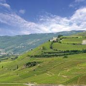 Les vins du Rhône montent en gamme dans le monde