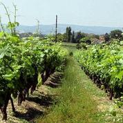 Investir dans un vignoble, c'est possible !