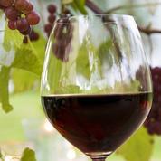Jour J pour le Beaujolais nouveau qui souhaite se réinventer