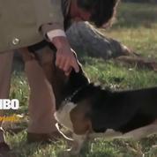 Columbo - VF - Diffusé le 11/04/20 à 21h05 sur TMC