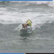 En Californie, une compétition de surf... pour chiens