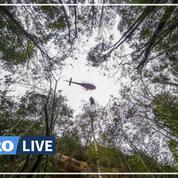 En Australie, une mission secrète pour sauver des arbres préhistoriques