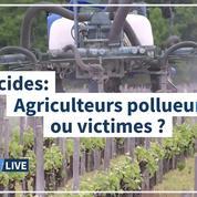 Agriculteurs: pollueurs ou victimes?