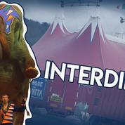 Cirque: ce que pensent les animaux