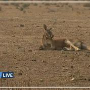 L'Australie connait sa journée la plus chaude jamais mesurée