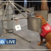 Covid-19: des chiens formés à détecter les personnes malades au Royaume-Uni