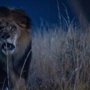 Zoo : le règne animal en série