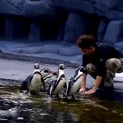Un zoo à Paris - VF - Diffusé le 25/12/16 à 02h30 sur FRANCE 5