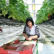 Invasion de fraises au rayon fruits: la saison des gariguettes a commencé