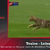 Zap'Sport : Un chat s'incruste dans un match de rugby