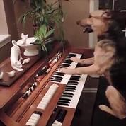 Un chien très doué... pour le piano