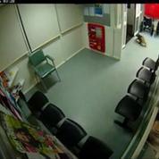 Australie : un koala s'invite aux urgences d'un hôpital