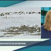 La biodiversité en entreprise (2/2): Arthur de Grave, François Letourneux, Claude Nahon et Nathalie Devulder –