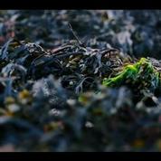Objectif Terre : des algues pour remplacer le plastique