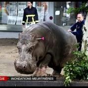 Inondations à Tbilissi : plusieurs animaux sauvages échappés d'un zoo
