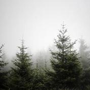 Extrait Five Trees - Yaron Herman