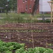 A Detroit, les fermes remplacent les usines