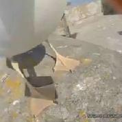 Une mouette vole la GoPro de deux touristes en Espagne