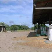 Deux industriels boycottent le marché français du porc