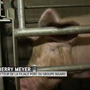 L'exportation: une solution pour la survie de l'élevage porcin ?