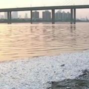 Tianjin : le niveau de cyanure explose le seuil de tolérance