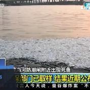 Tianjin : des milliers de poissons morts échouent sur une côte