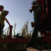 Sécheresse en France : certaines récoltes sont menacées